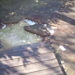 Parco giochi e preservativi: assume nuove forme il degrado a Fuorigrotta