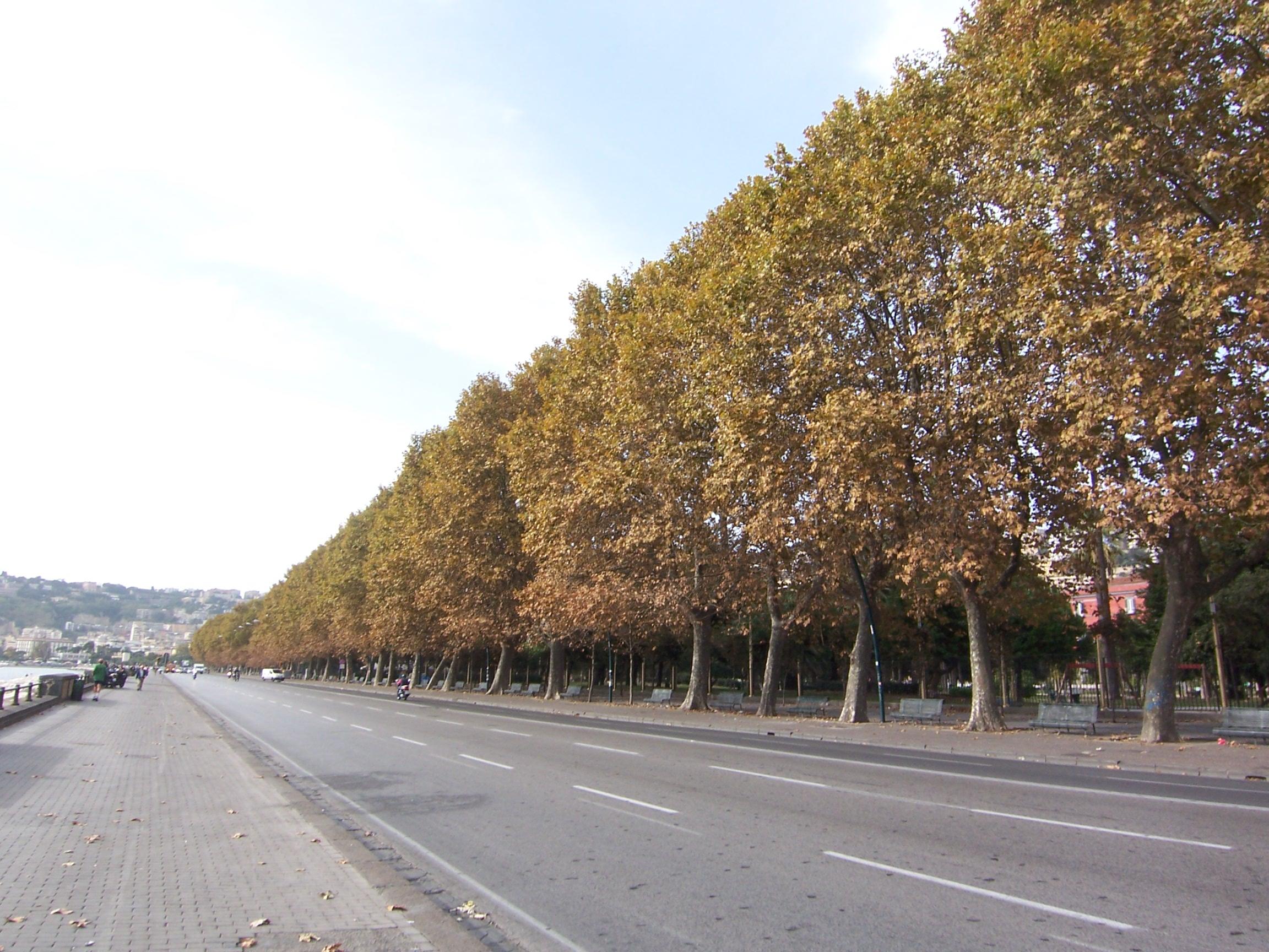 Progetto Eco-Green per il lungomare di Napoli.
