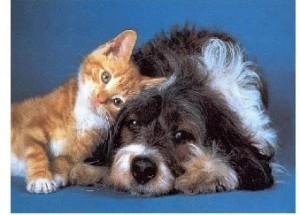 L'Università scopre la Pet Therapy