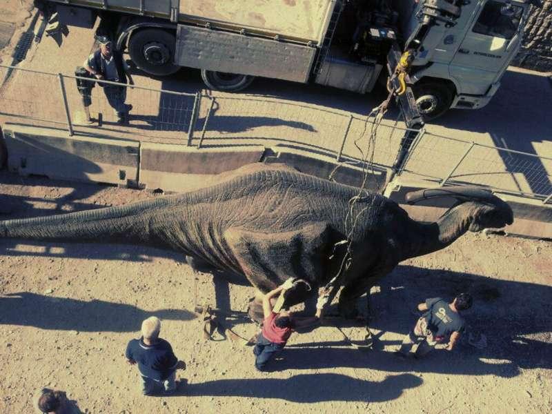 Road Tv Italia con la sua redazione a Via Roma intervista i napoletani e parla di dinosauri