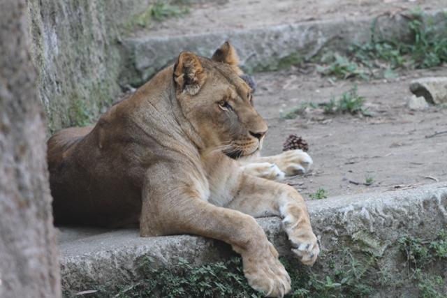 Un viaggio all'interno dello Zoo di Napoli tra degrado e speranza (VIDEO)