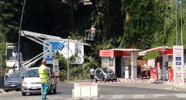 Potati gli alberi più pericolosi lungo via Terracina