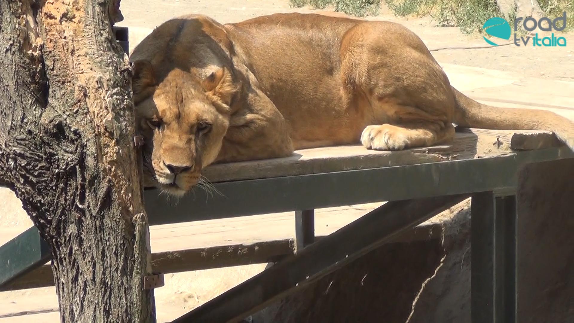 Napoli riavrà presto il suo zoo