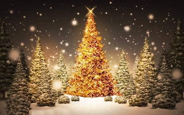 Napoli avrà il suo albero di Natale, sarà alto 14 metri!
