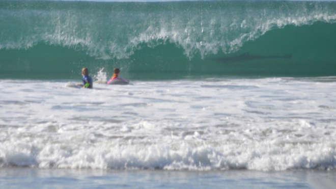 Uno squalo a pochi passi dai bambini: la madre lo nota solo in foto