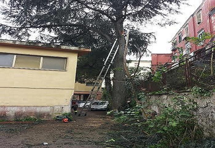 Cade un albero nel cortile di una scuola elementare, dramma sfiorato ai Colli Aminei