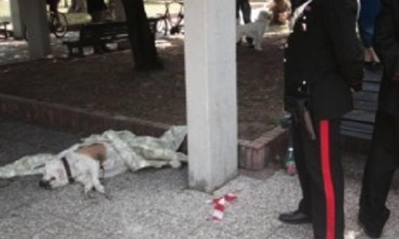 Spara e uccide un cane a sangue freddo in strada, il caso sconvolge e indigna gli animalisti