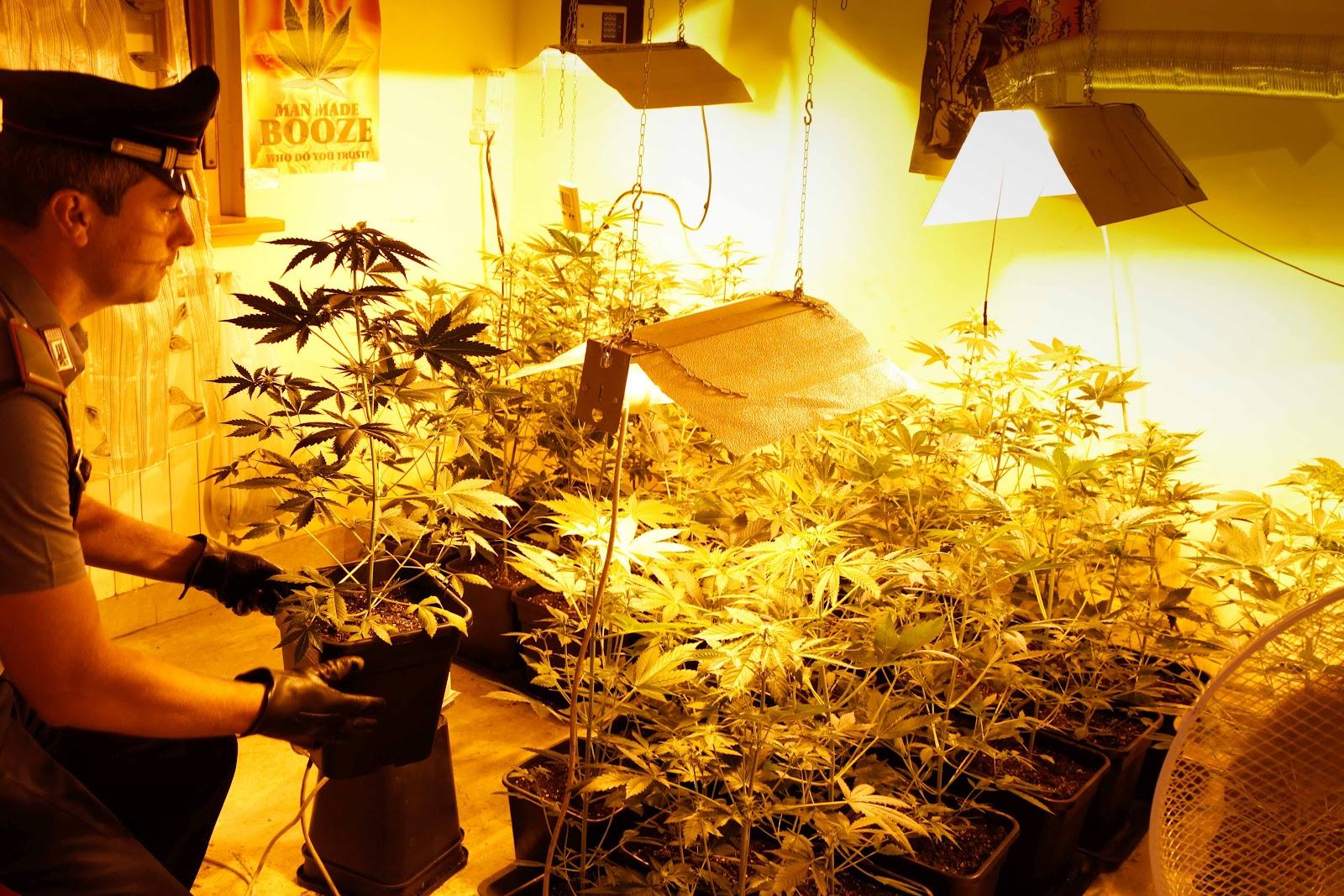 Marijuana in convento: trovata una serra abusiva in ex-monastero alla Sanità