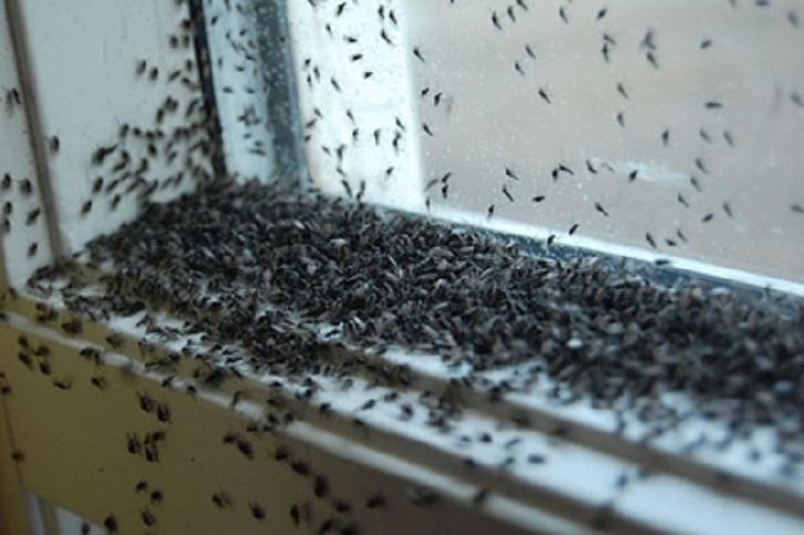 Invasione di insetti al Loreto Mare