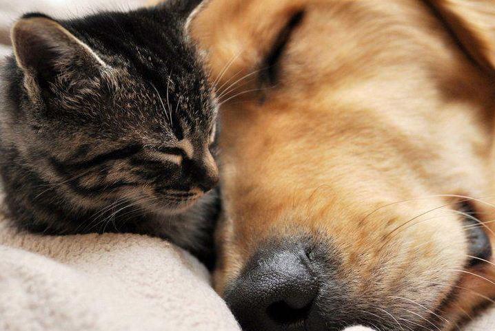 Animal Day: Napoli si schiera in difesa degli amici a 4 zampe