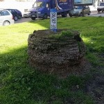 Palme di Viale Augusto: il quartiere vuole nuovi alberi e maggiore pulizia