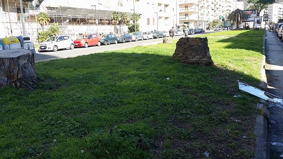 Palme di Viale Augusto: quartiere vuole nuovi alberi e più pulizia