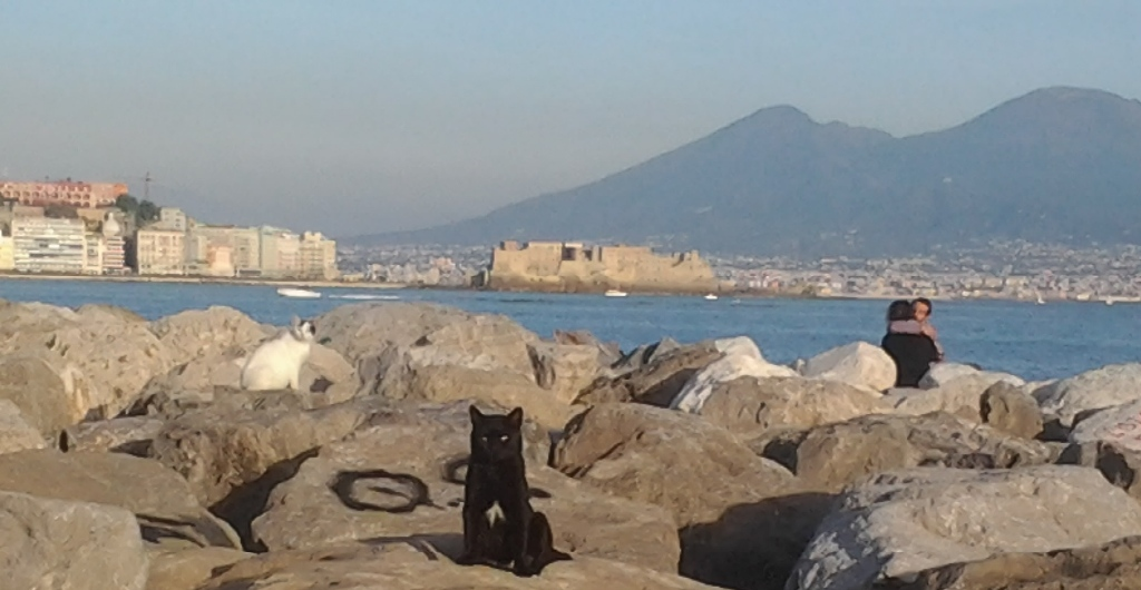 Napoli amica dei gatti, lo rivela lo studio