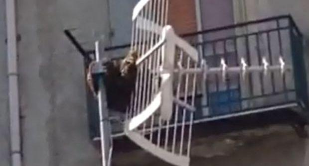 Sciame di api a Fuorigrotta attacca i passanti, paura tra i cittadini