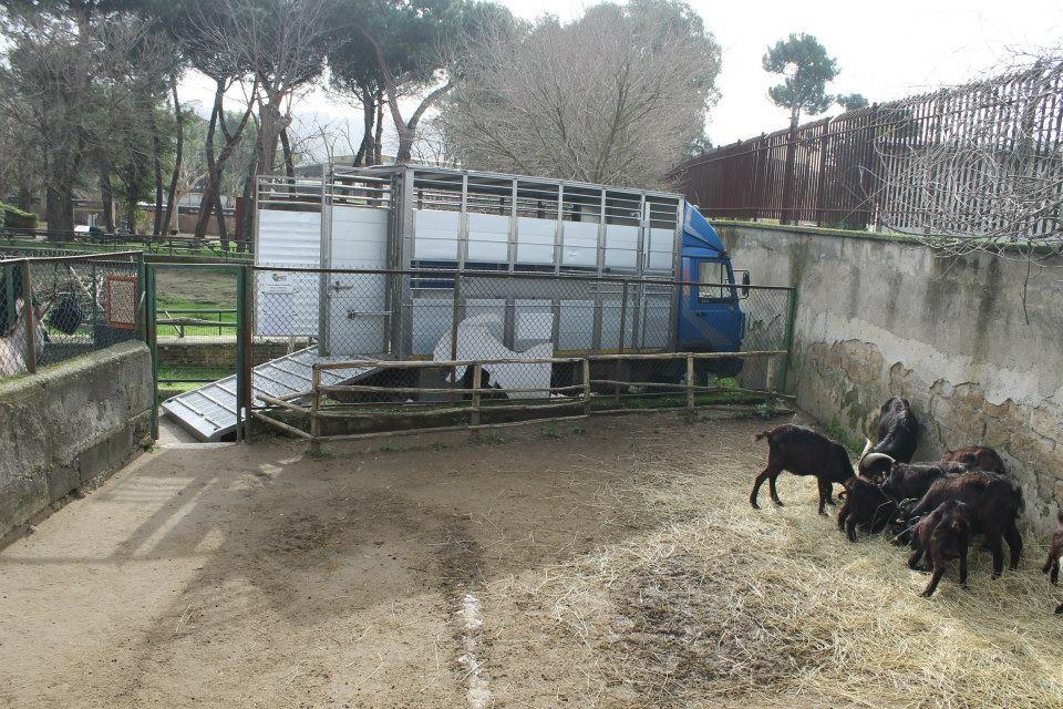 Zoo di Napoli: