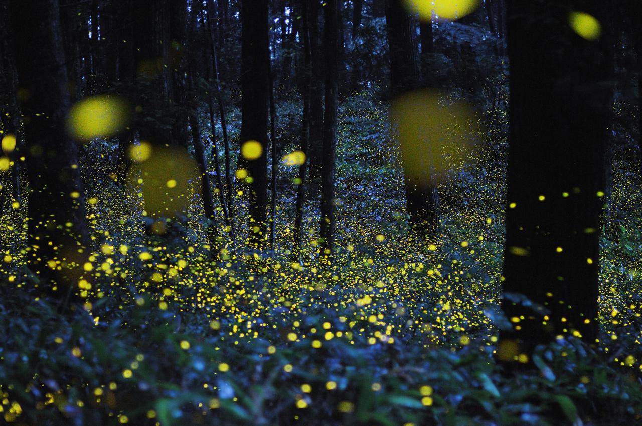 Foresta di Cuma: visita serale tra le lucciole per scoprirne i misteri