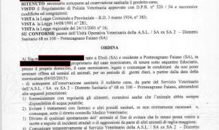 Cane morsicatore finisce agli arresti domiciliari a Pontecagnano