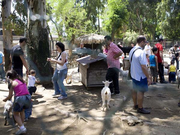 Weekend allo Zoo di Napoli: Come si riproducono i rettili?