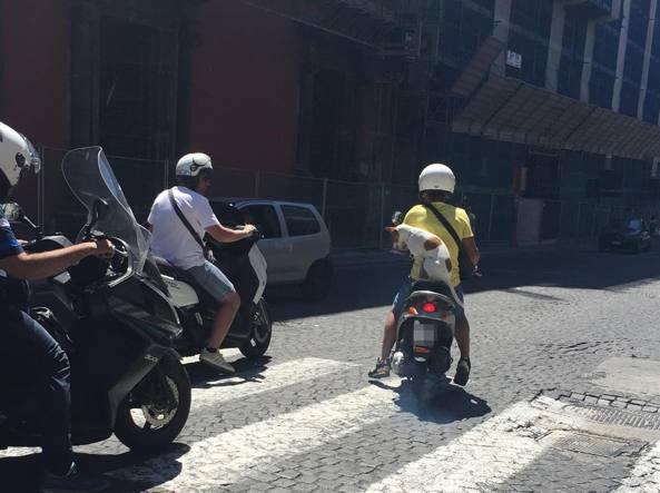 Cane in scooter a Napoli, lo strano caso che mette in difficoltà i vigili urbani