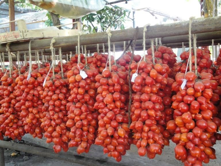 Sagra del pomodorino del piennolo del Vesuvio: dal 24 al 26 luglio un evento da non perdere