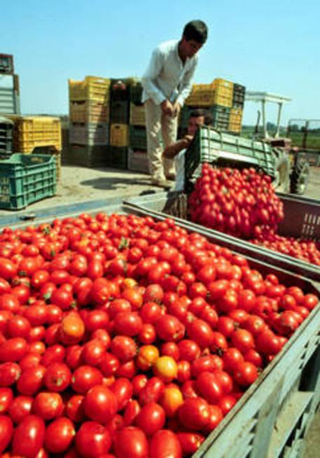 Lavoro in nero: sanzioni amministrative nel Casertano per migliaia di euro