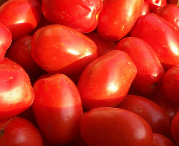 Pomodori San Marzano: allarme dei produttori per pomodori contraffatti