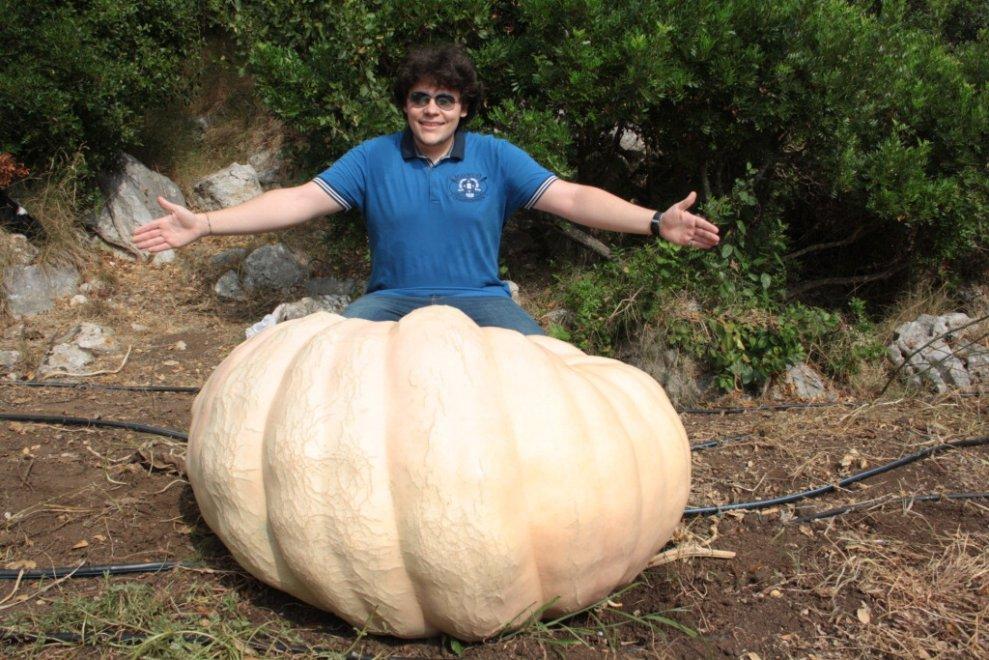 Super zucca a Capri: Emanuele Garofano e la zucca da 252 chilogrammi