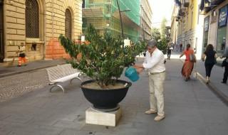 Carmine Attanasio s'improvvisa giardiniere per protesta