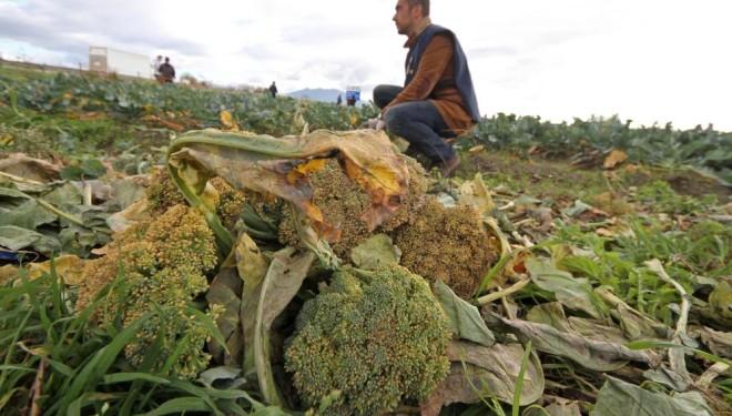 Terra dei Fuochi, Casoria: trovati rifiuti tossici in un campo di broccoli