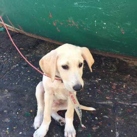 Cane cade da aliscafo: salvato da un gruppo di velisti, il video fa il giro del web