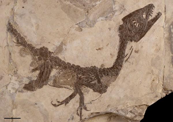 Dinosauro Ciro, in esposizione a Benevento dal 18 al 25 ottobre