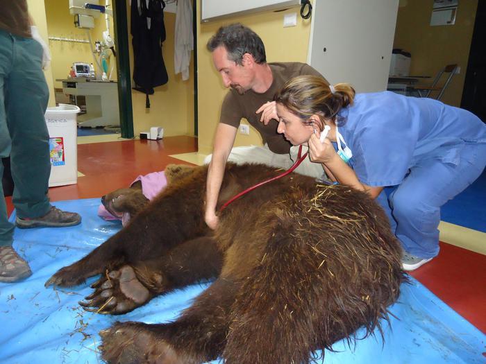 Orso Peppe operato di ernia del disco