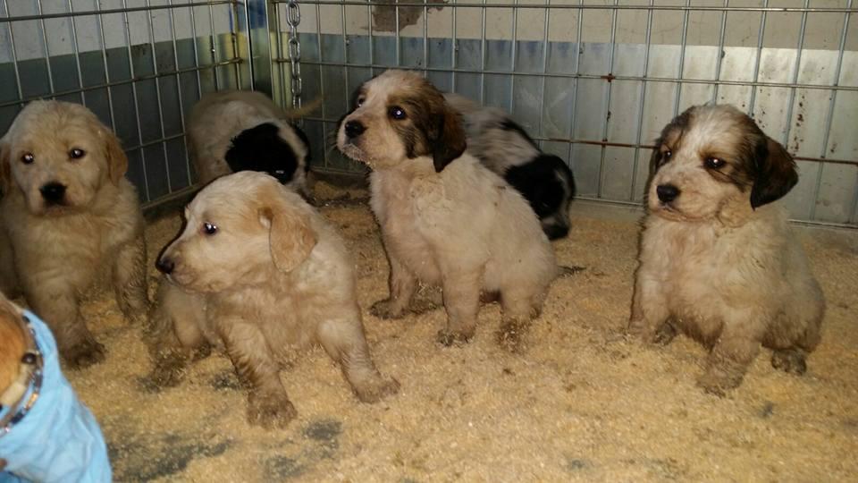 Cuccioli buttati in un cassonetto, trovati dai dipendenti Asìa
