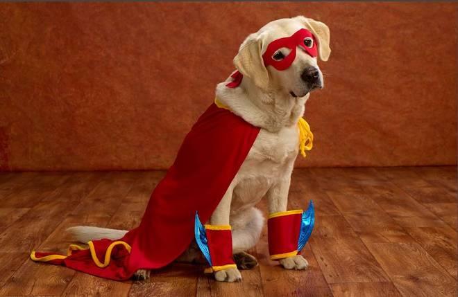 Halloween: bambino vestito da Papa Francesco e cani in maschera