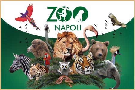 Zoo di Napoli: addio all'orso Peppe