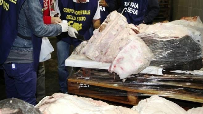 Pesce sequestrato nel Napoletano: era stato conservato in pessime condizioni