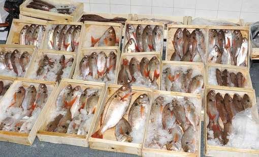 Sequestrato pesce senza etichetta a Roma e Napoli