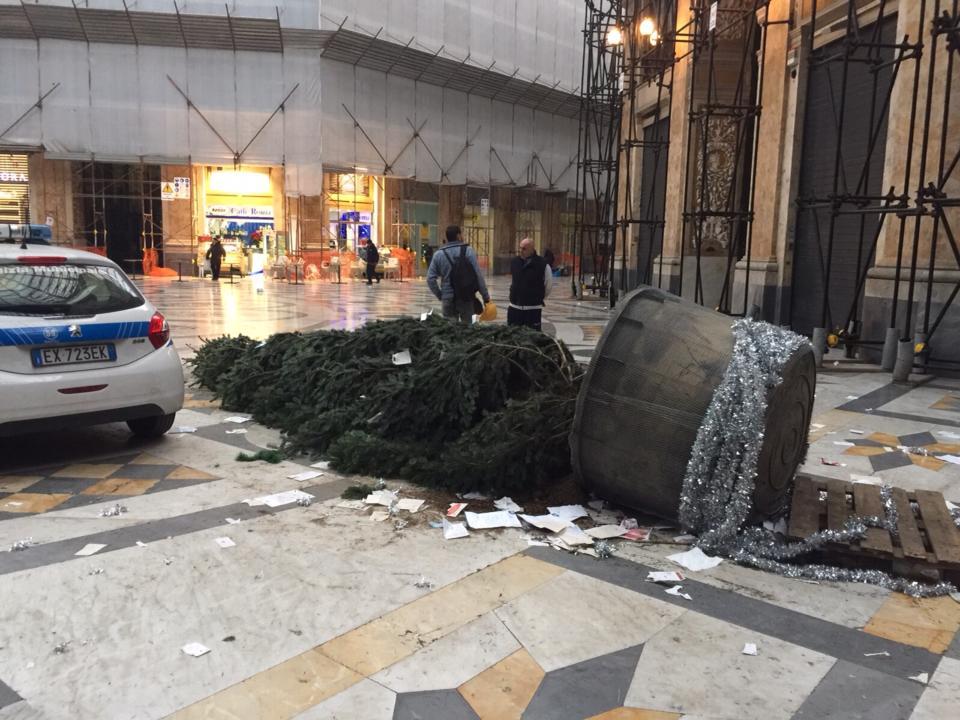 """Albero rubato, Borrelli: """"Non ci arrendiamo"""""""