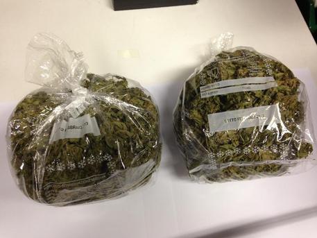 Piantagione di marijuana in casa: tre arresti