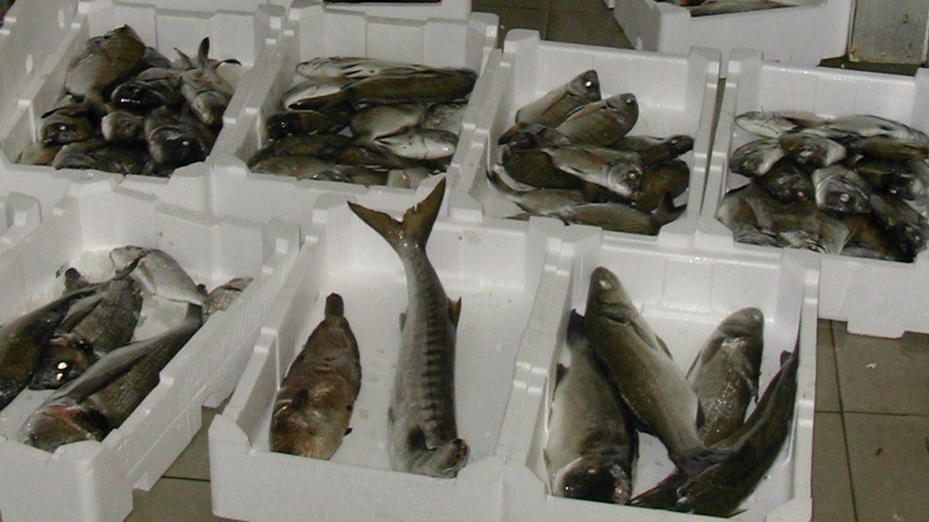 Sequestrati 300 kg di pesce mal conservato a Torre del Greco