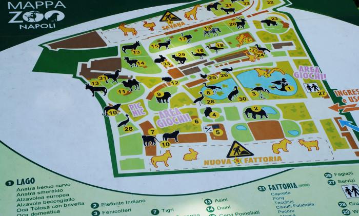 Una nuova area per gli scimpanzé: parte il crowdfunding allo zoo di Napoli
