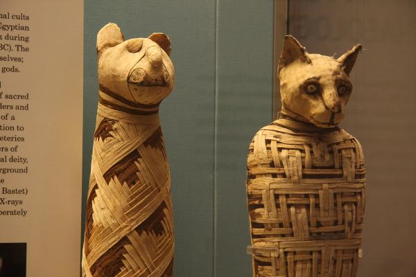 Mummie di gatto in mostra a Napoli
