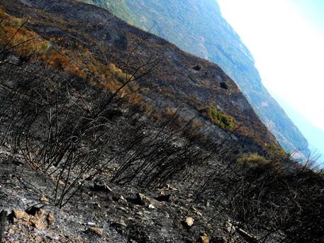 Piromane in manette nel Parco Nazionale del Cilento