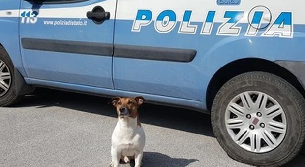 Trovata droga a Capri: sequestrati 40 grammi e piante di marijuana grazie a 'Pocho'