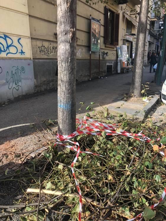 Il Vomero non è più un quartiere per alberi (FOTO)