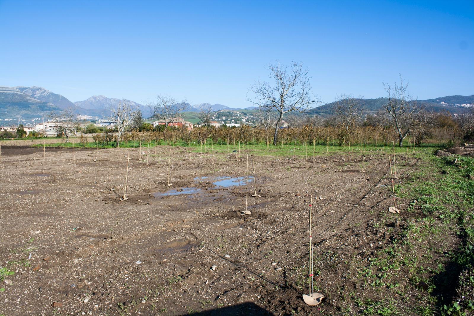 Ambiente, piantati i primi 700 alberi a Pontecagnano Faiano grazie a Automar