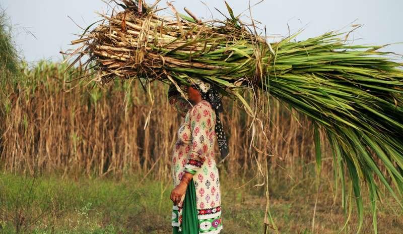 Le donne indiane costrette a togliersi l'utero per poter continuare a lavorare