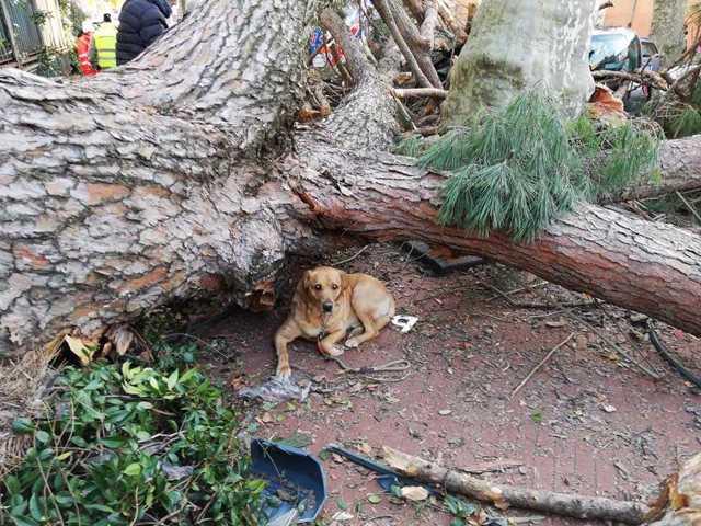 Tragedia a Cava de' Tirreni, oculista muore schiacciato da un albero
