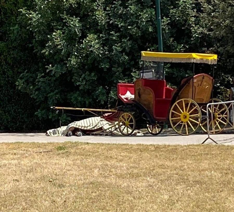 Reggia di Caserta, cavallo del servizio carrozze stramazza al suolo e muore mentre trasporta i turisti