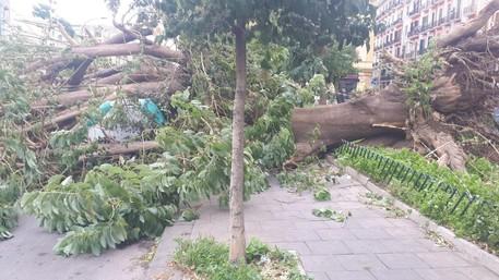 Maltempo, tragedia sfiorata a Fuorigrotta: albero si abbatte su un marciapiede
